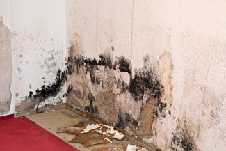 mold damage remediation and removal in Texas