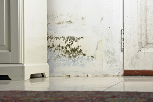 Mold testing and inspection services from Spring's experts