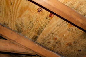 Mold growing on roof sheathing in Cypress attic